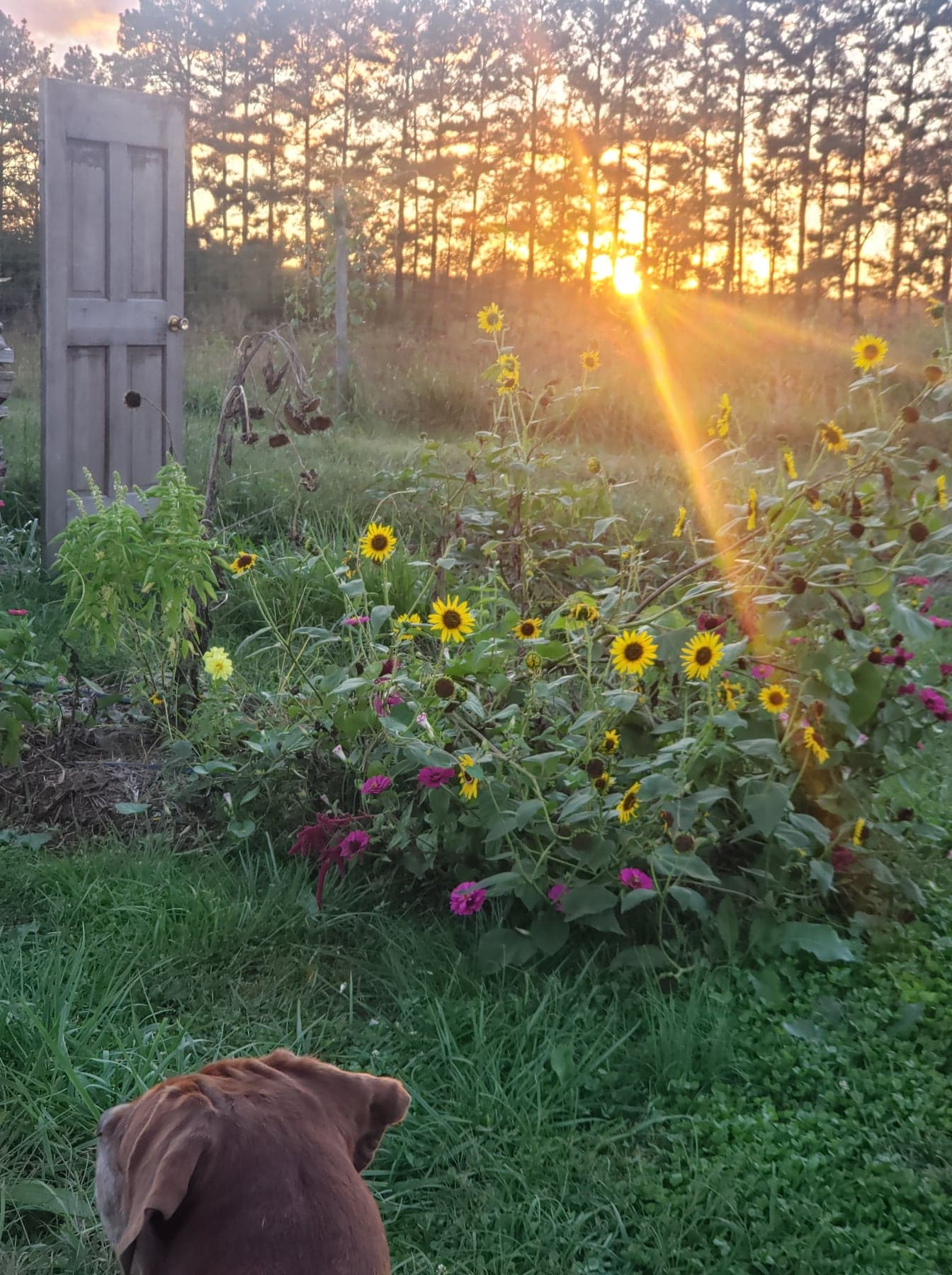 What we planted in 2020… Beyond Hemp!